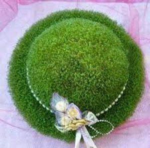 سبزه خاکشیر به شکل کلاه
