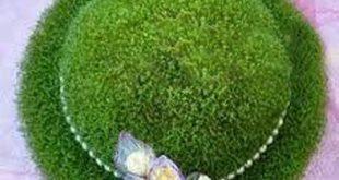 فروش اینترنتی خاکشیر ارزان قیمت برای سبزه