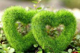 سبزه خاکشیر به شکل قلب