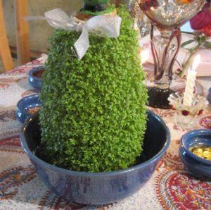 سبزه خاکشیر به شکل کوزه