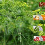 قیمت فروش خاکشیر در مشهد