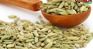 خرید رازیانه همدان با قیمت ارزان در بازار