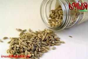 فروش دانه رازیانه همدان با کیفیت اعلا