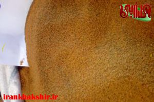 قیمت خاکشیر کیلویی در همدان چند است؟