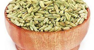 فروش گیاه رازیانه همدان با قیمت ارزان